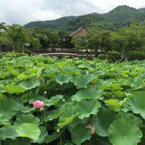京都の旅 嵐山編 ①