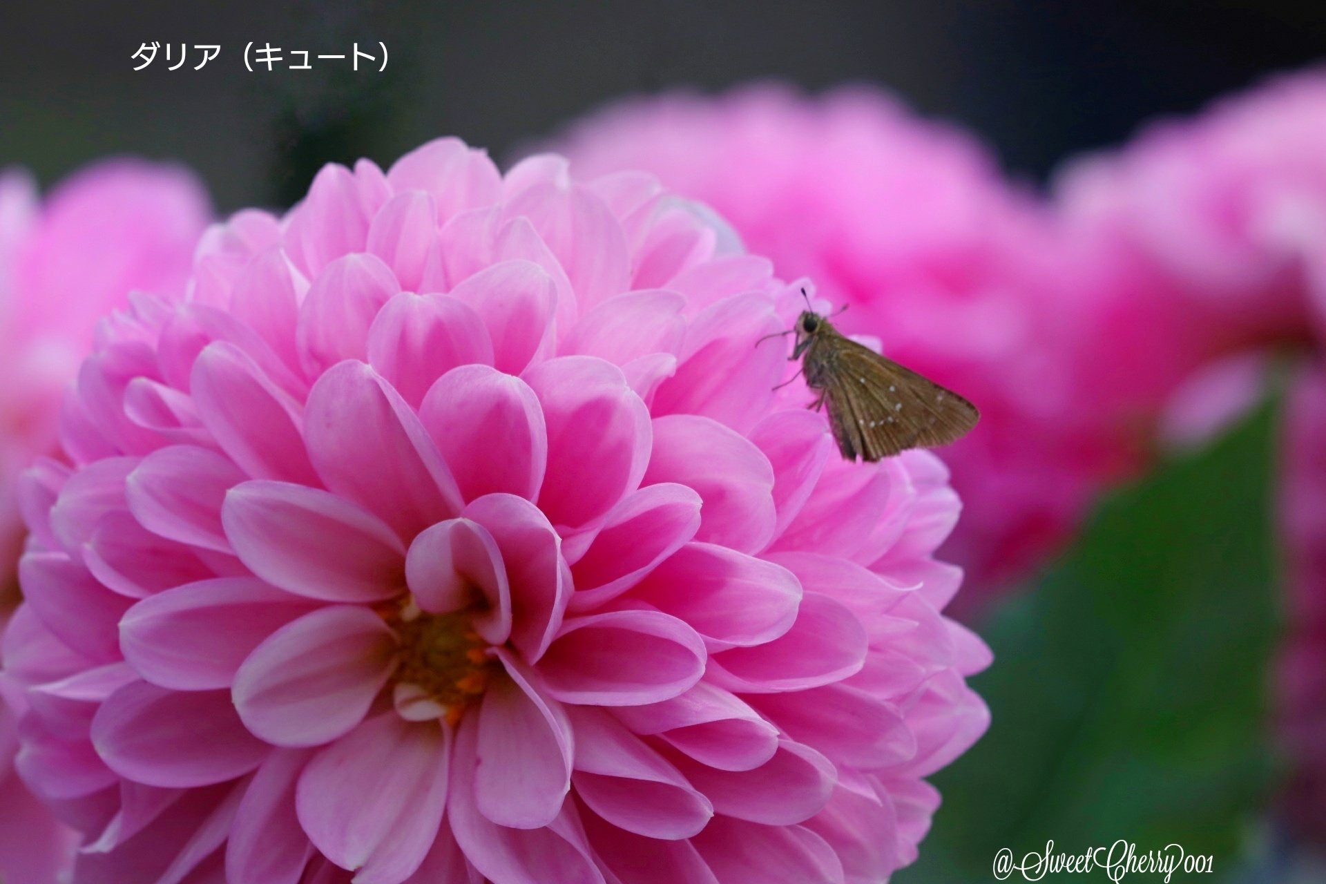 4AC3B3FB-2B18-4CA0-985B-29CD93DEBD53